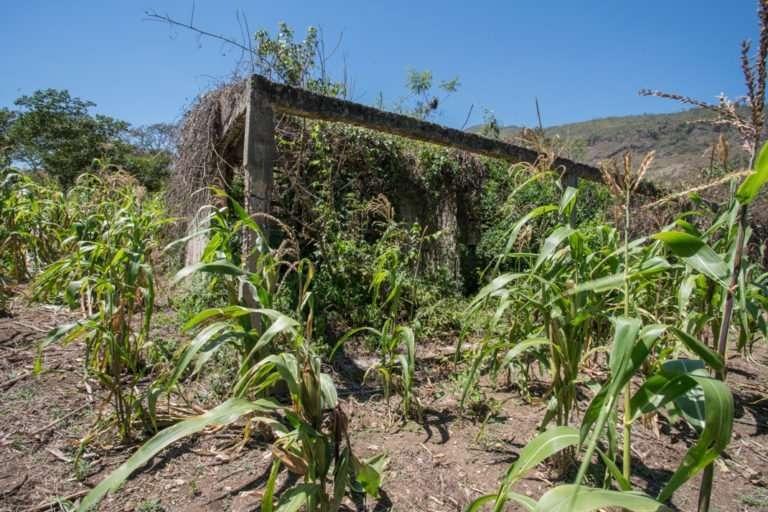 Ruinas del campamento de obreros de la represa Chacté. Hace más de tres décadas los habitantes de Cancúc expulsaron a los trabajadores pues no contaban con el permiso de las comunidades. Actualmente el terreno es usado para la siembra de milpa y cafetales.