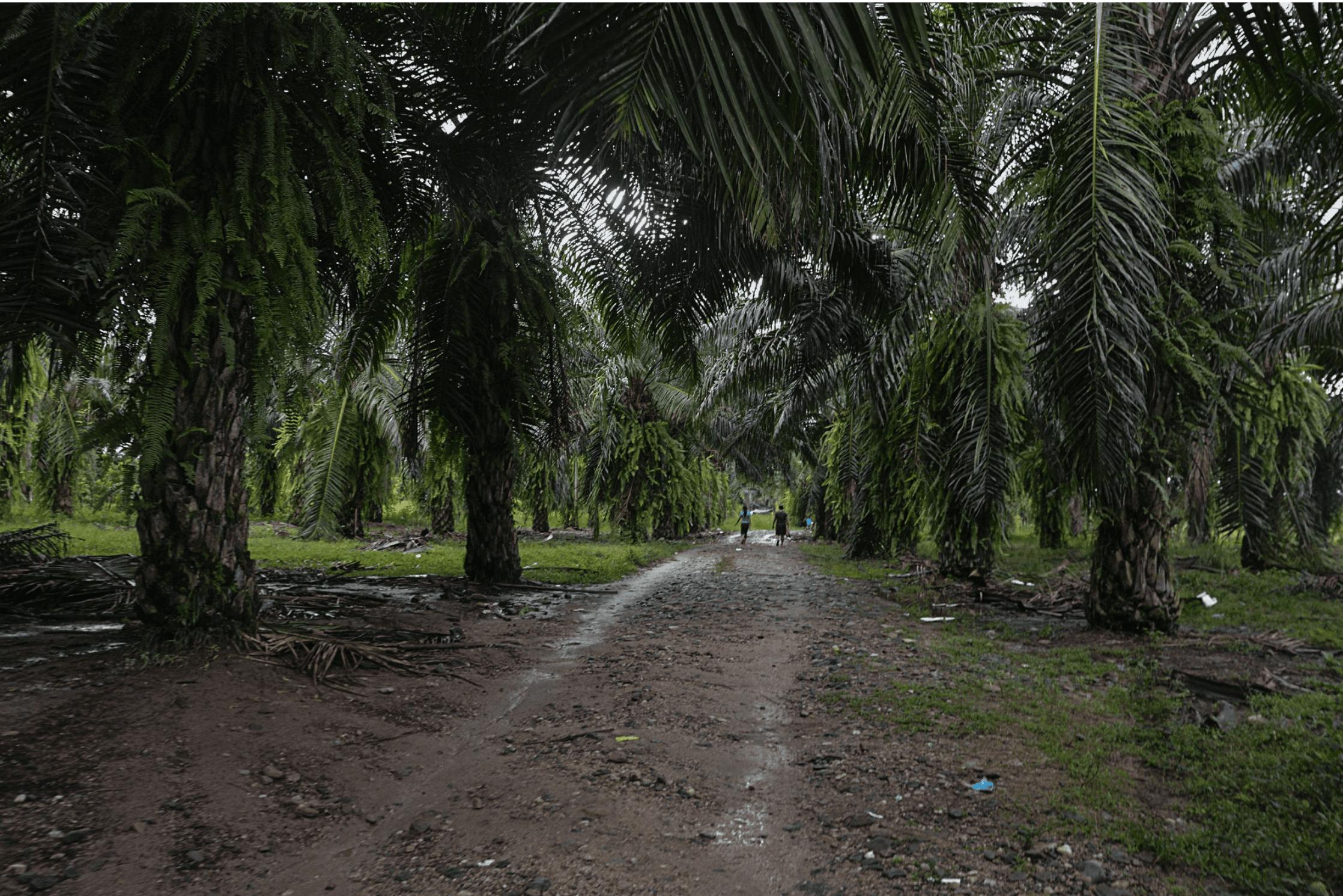 Pico de Oro: una isla cercada por agua y palma de aceite en Petén